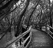A Walk Through The Mangroves by Ron Hannah