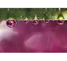 Crystal Pink Photographic Print