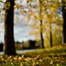 Fall by David Preston