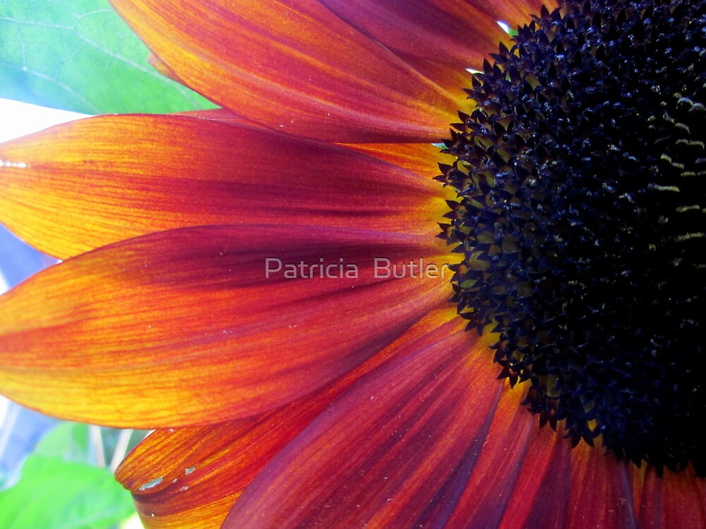 First Sunflower of the Season by Patricia  Butler