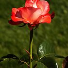 Roses Of Portland ~ Part Three by artisandelimage