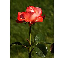 Roses Of Portland ~ Part Three Photographic Print
