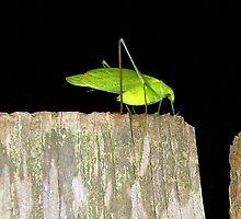 Leafhopper by Aramantha