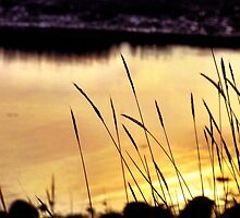 Marsh at Sunset by Rebecca Lee Photography