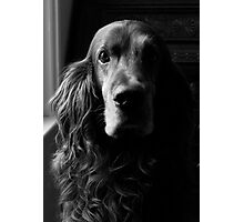 Portrait of a crazy red dog Photographic Print