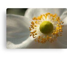 With open heart Canvas Print