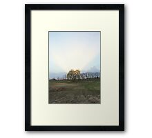 Halo Willow Framed Print