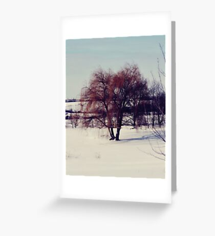 Winter Willow Greeting Card