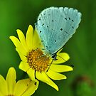Blue on Yellow by Russell Couch