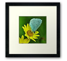 Blue on Yellow Framed Print