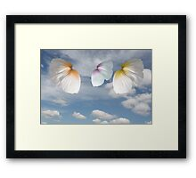 Butterfly Poppies Framed Print