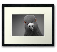The Beak Framed Print