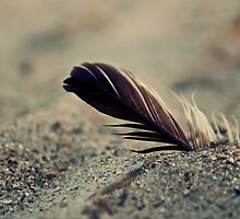 Feather in the Sand by Kevin Stauss
