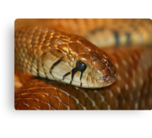 Brown Snake Canvas Print