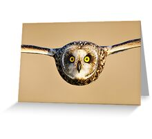 Short-eared Owl flying towards Camera Greeting Card