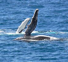 Whale watching! by PhotosByG