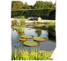 Amazon Water Lily Garden Poster