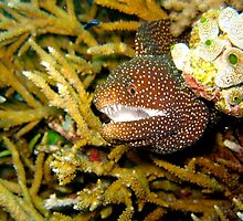 Awesome Moray Eel by wwwildlife