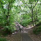Pathway through the trees at Newmillerdam Arboretum by Anna Myerscough