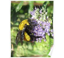 Bumblebee bokeh Poster