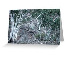 Red Gums in the Creek Greeting Card