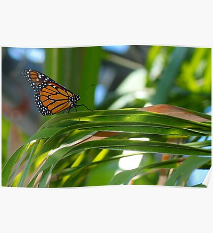 Butterfly Trail by Liane Pinel Poster