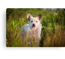 Single white stray tyke dog  Canvas Print