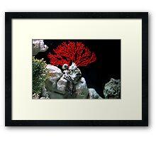 Lion Fish Flower Framed Print