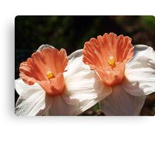 Pink Daffodils - Drouin Canvas Print