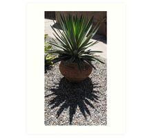 cactus shadow Art Print