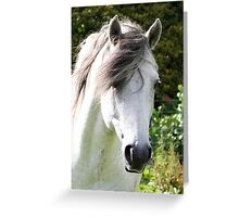 Connemara Pony Stallion Greeting Card