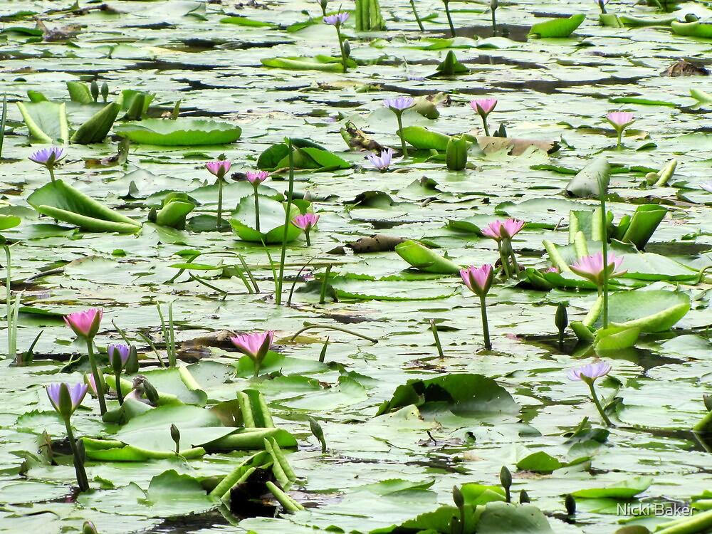 Beauty in Bloom by Nicki Baker