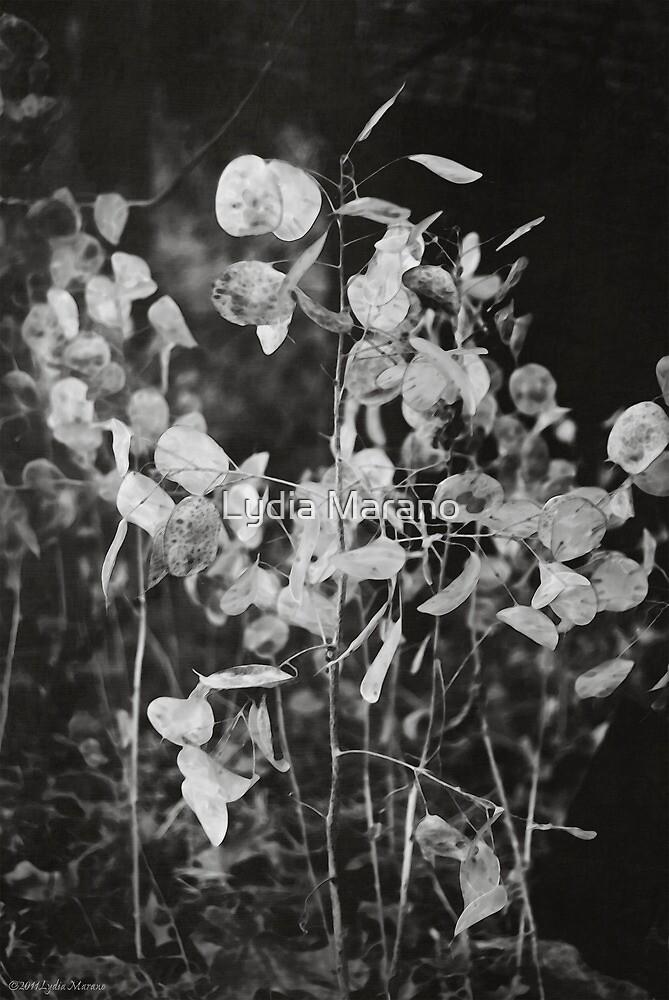 Kodama by Lydia Marano