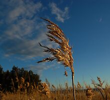 Reeds - The Entrance by AmyBonnici