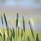 Seashore Grasses by Dawn B Davies-McIninch