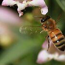 Bee by KatsEyePhoto