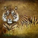 The Sumatran Tiger  by Saija  Lehtonen