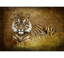 Tiger's Tale Photographic Print