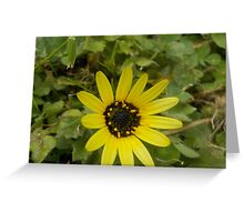 Not Just a Common Daisy Greeting Card