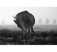 Out of the mist Photographic Print