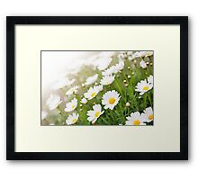 White chamomiles healthy herb Framed Print