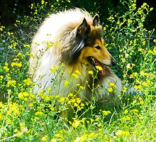 spring 2,2 by BellatrixBlack