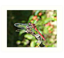 Cute Dragonfly Art Print