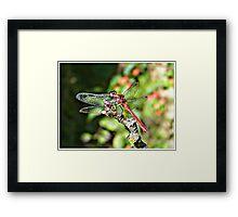 Cute Dragonfly Framed Print