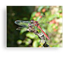 Cute Dragonfly Metal Print