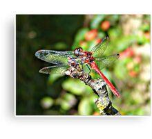 Cute Dragonfly Canvas Print