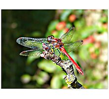 Cute Dragonfly Photographic Print