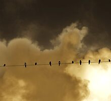 The birds on the wire by Vanilla Sky
