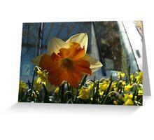 Daffodil aura Greeting Card