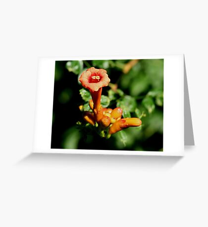 One Trumpet Flower Greeting Card
